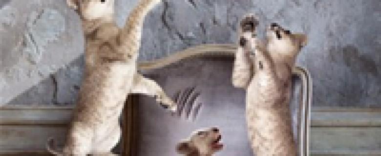 James Goldman: Az oroszlán télen